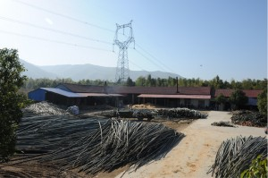 竹を伐採し、集める。